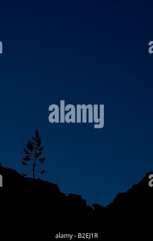 Eine einsame Kiefer ist vor einem tiefblauen Himmel auf einem vulkanischen Felsen zu Tage tretenden Silhouette. - Stockfoto