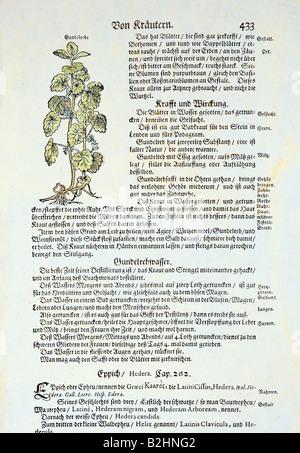"""Botanik, Kräuter, Gemahlene Efeue (Glechoma hederacea), Holzschnitt, farbig, aus """"Kraeuterbuch"""" (Kräuterbuch), von Adamus Lonicerus (1528 - 1586), überarbeitet von Peter Uffenbach, Frankfurt, Deutschland, 1679, Seite 433, Privatsammlung,"""