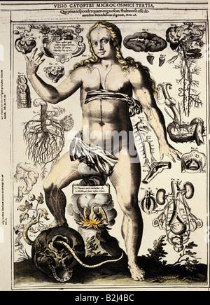 Menschliche Anatomie - weiblichen Körper Stockfoto, Bild: 16330915 ...