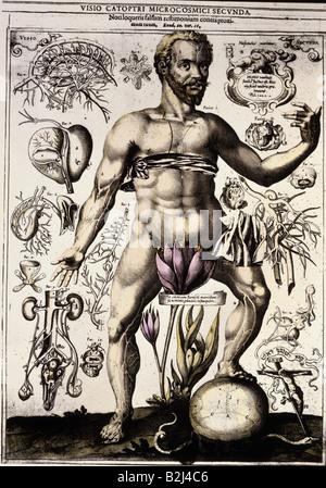 Menschlichen Körper Organe Anatomie Stockfoto, Bild: 185902684 - Alamy