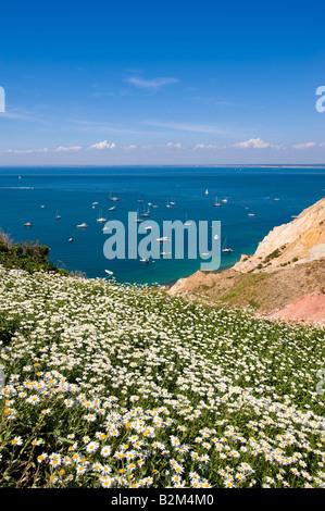 Küste mit Blick auf Alum Bay und Ärmelkanal Isle Of Wight Vereinigtes Königreich - Stockfoto