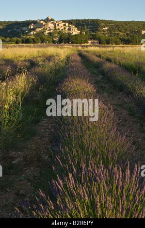 Blick über Lavendelfelder in Richtung Dorf Banon im morgendlichen Sonnenlicht gebadet - Stockfoto