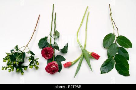 Elemente für die Herstellung ein Blumenarrangement. Rosen, Tulpen, grün - Stockfoto