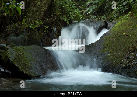 frisches Wasser des Cikaniki-Flusses in Indonesisch National Park, Fluss und Bach mit Felsbrocken in der Mount Halimun - Stockfoto
