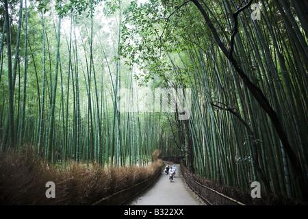 Bambusbäume in den Bambuswald in Arashiyama Park Park in der Nähe von Kyoto in Japan. - Stockfoto