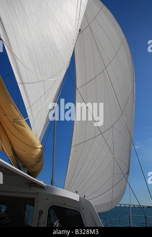 Katamaran unter vollen Segeln in Biscayne Bay Miami Florida - Stockfoto
