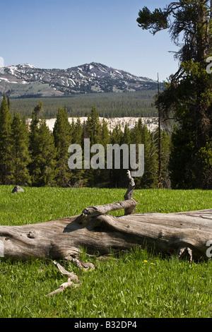 Umgestürzten Baumstamm und Berg Landschaft YELLOWSTONE-Nationalpark, WYOMING - Stockfoto