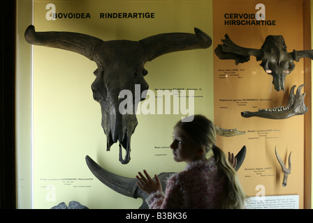 Junge Besucher betrachten den Schädel ein Auerochse (Bos Primigenius) in Humboldt Museum Fur Naturkunde in Berlin - Stockfoto