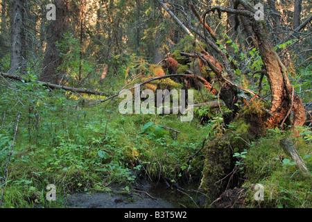 Brown-Lowery Provincial Park, Alberta - Stockfoto