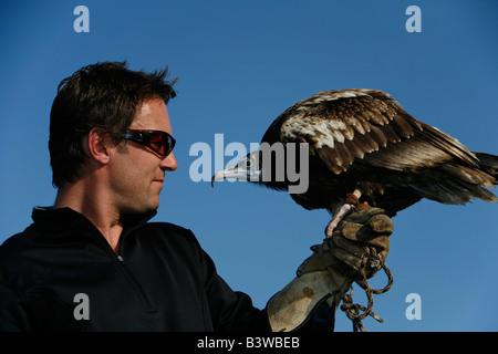 Ein Schmutzgeier (Neophron Percnopterus) und ein Falkner - Stockfoto