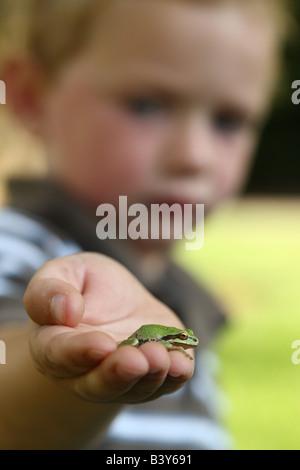 Kleiner Junge hält kleine Laubfrosch - Stockfoto