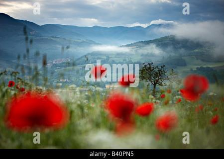 Misty Dawn in einem Mohnfeld in der Valnerina in der Nähe von Preci mit den Bergen Monti Sibillini Nationalpark, - Stockfoto