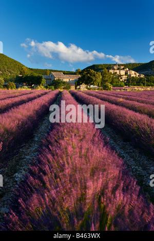 ein Lavendelfeld mit dem Dorf Banon jenseits der Vaucluse, Provence, Frankreich - Stockfoto