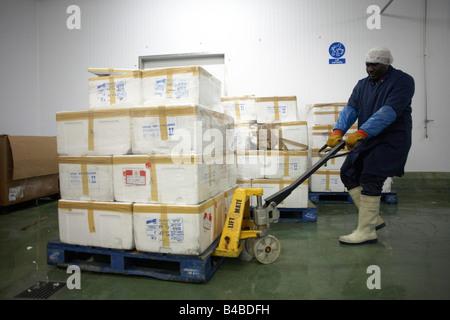 Ein Mitarbeiter von Fisch Produkt Importeure New England Seafoods zieht eine schwere Palette von Polystyrol Fälle - Stockfoto