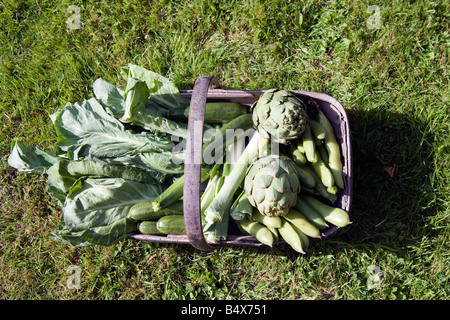 Stillleben mit Gemüse Korb - Stockfoto