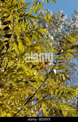 Bäume im Herbst - Stockfoto