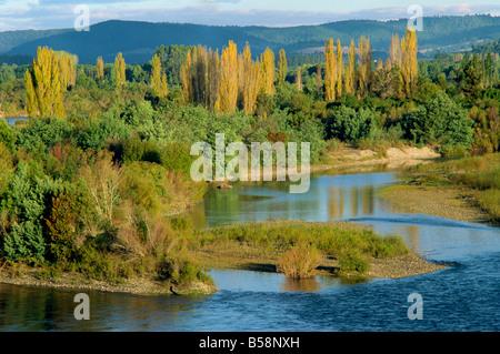 Bäume an den Ufern des Rio Calle Calle im Lake District, Chile, Südamerika - Stockfoto