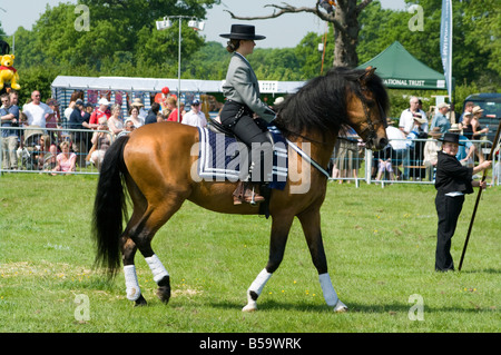 Andalusischen Hengst mit einem weiblichen Reiter In Tracht Cowpie Rallye Betchworth Surrey Person Frau Braun Reitpferd - Stockfoto