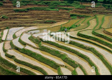 Landwirt in terrassierten Reisfelder bei Longsheng im Nordosten Guangxi, China - Stockfoto