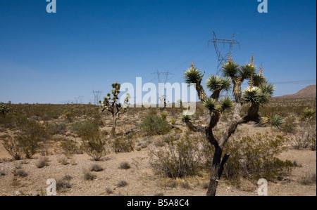 Joshua Bäume und Strommasten auf Joshua Tree Road fahren - Stockfoto