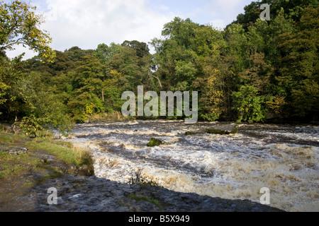 Aysgarth Falls Wensleydale Yorkshire - Stockfoto
