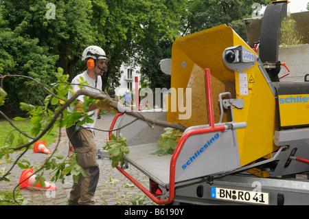 Baumpfleger tragen von Sicherheitskleidung schob eine Verzweigung in einen Schredder - Stockfoto