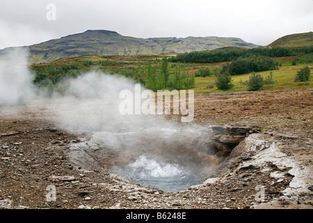 Heiß, Kochen und dünsten Frühling, Geothermie Region Haukadalur, Geysir, Island, Europa - Stockfoto