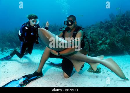 Taucher, die gerade ihr Tauchlehrer, streichelte den Bauch von einem Ammenhai (Ginglymostoma Cirratum) im Weg, die - Stockfoto