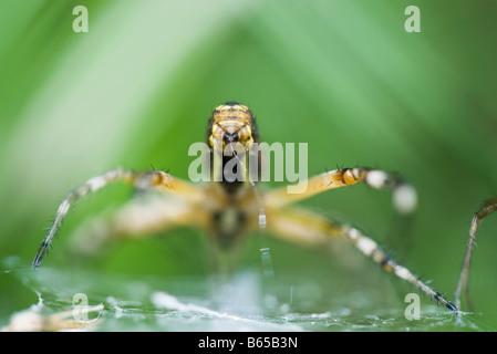 schwarz und gelb argiope spider auf tomaten estaca new mexico usa stockfoto bild 53088893 alamy. Black Bedroom Furniture Sets. Home Design Ideas