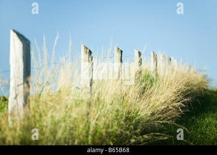 Zaun in hohe Gräser - Stockfoto