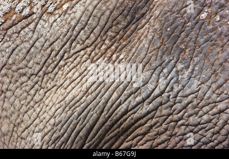 Nahaufnahme von Elefantenhaut - Stockfoto