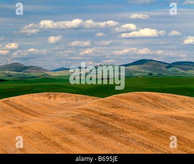 WASHINGTON - Feldern im fruchtbaren Palouse Bereich Eastern Washington. - Stockfoto