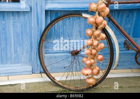 Klassische Zwiebeln auf einem Fahrrad Frankreich - Stockfoto