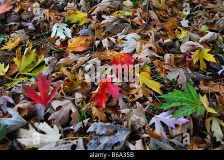 Woodfloor mit bunten Herbstlaub - Stockfoto
