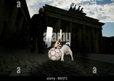 Jack Russel Terrier spielen mit einem Ball vor dem Brandenburger Tor bei Nacht, Brandenburger Tor, Berlin, Deutschland, - Stockfoto