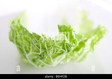 Chinesischer Salat auf weißem Hintergrund geringe Schärfentiefe am Rand des Blattes - Stockfoto