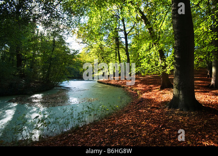 Herbstfarben im Wald - Stockfoto