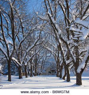 Eine verschneiten Bäumen gesäumten Fahrt führt zu einem Haus in einer Winterlandschaft. - Stockfoto