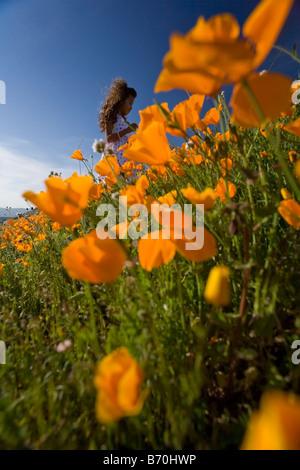 kleines Mädchen 7 Jahre alt Kommissionierung California Poppies von einem Hügel in Lake Elsinore riverside County - Stockfoto