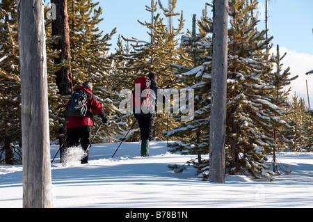 Langläufer auf dem Trail, winter. Upper Geyser Basin in der Nähe von Old Faithful, Yellowstone Nationalpark, Wyoming. - Stockfoto
