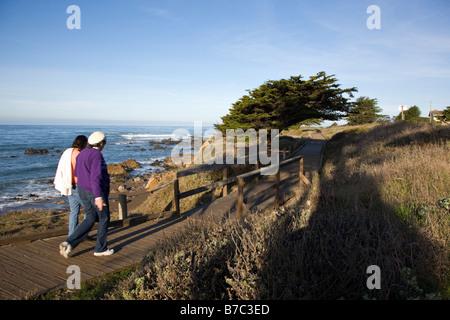 Besucher zu Fuß auf dem Holzsteg vorbei an einem Cypruss Baum, San Simeon State Park, San Simeon, Kalifornien, USA - Stockfoto
