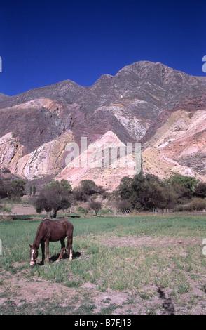 """Pferd und """"The Maler Palette"""" / """"La Paleta del Pintor"""" Hang, Maimara, Quebrada de Humahuaca, Argentinien - Stockfoto"""