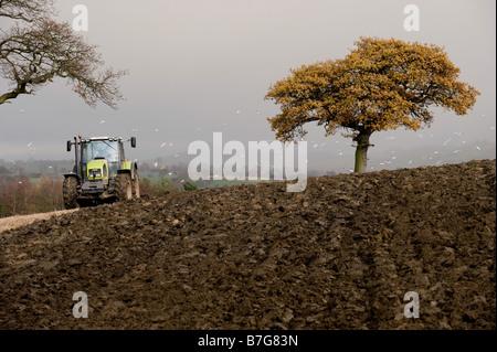 Ein Traktor Pflüge ein Feld, während von einem Schwarm von Möwen verfolgt. - Stockfoto