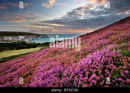 Heather auf Headon Warren mit Blick auf The Needles, Isle Of Wight - Stockfoto