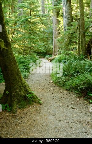 BRITISH COLUMBIA - Trail durch den alten Wald im Macmillan Provincial Park auf Vancouver Island. - Stockfoto
