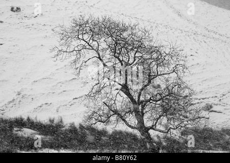 Baum im Schneesturm - Stockfoto