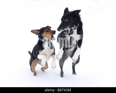 Hunde im Schnee spielen - Stockfoto