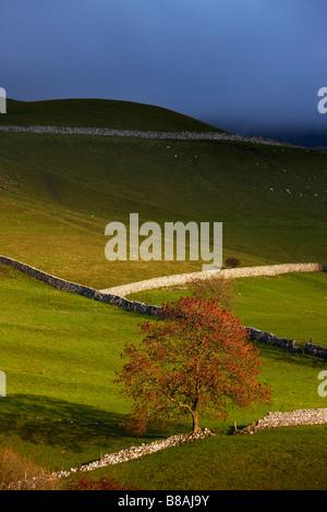 steinernen Mauern und Scheunen Nr. Kettlewell, Wharfedale, Yorkshire Dales National Park, England, UK - Stockfoto