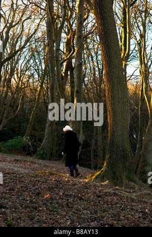 eine weibliche Walker mit weißen Hut geht weg in einem herbstlichen New Forest in Großbritannien - Stockfoto