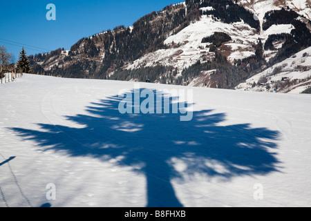 Österreich Europa. Tanne Baum Schatten auf dem Schnee im winter - Stockfoto
